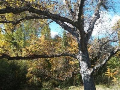 Alcarria_Barranco Reato_La Tajera; el bosque madrid sierra calle real san sebastian de los reyes el